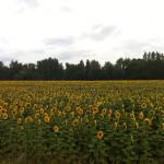 donau-radtour-budapest-schweiz-iphone013
